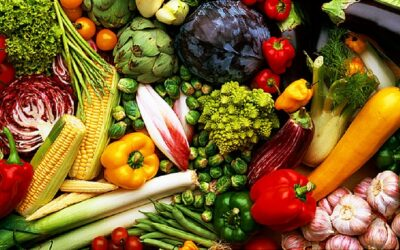 The Power of Plant-Based: The Meatless Difference
